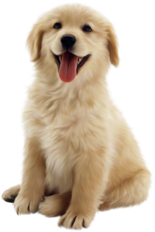 2b4eed62f217d18c8a9d8367a7edd135_small-animal-cottonwood-puppy-clipart-png_537-800